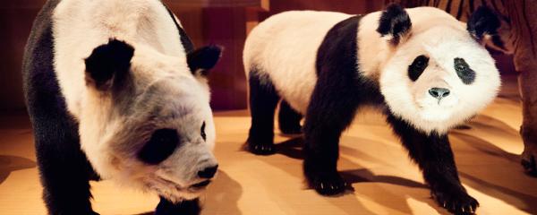 上野で動物たちに会うコース