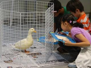 6/8-6/30 上野動物園サマースクール参加者募集