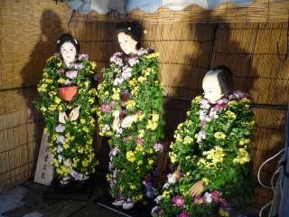 大圓寺【谷中菊まつり】