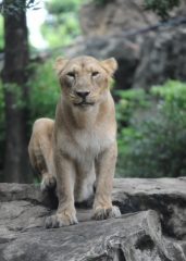 9/23 上野動物園の動物慰霊祭