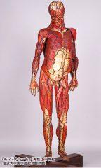 特別展「人体―神秘への挑戦―」