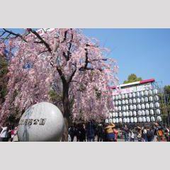 上野公園【うえの桜まつり】