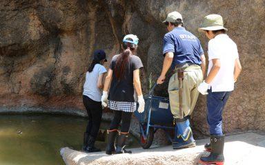上野動物園サマースクール参加者募集