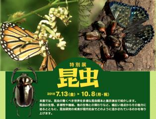 特別展「昆虫」