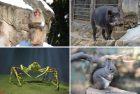 冬の動物園・水族園で体も心も「ほっと」になるキャンペーン「Visit ほっと Zoo 2019」開催!